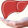 [肝主筋]肝主藏血排毒 教你日常如何保护肝